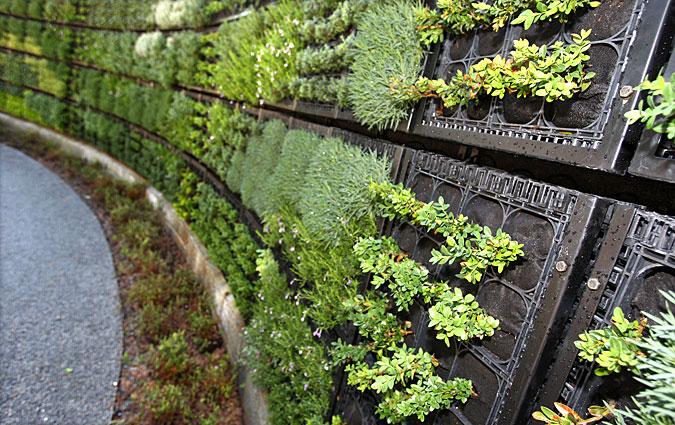 Edible Garden Ideas initial concept plans show an extensive edible garden area with kitchen classroom facilities Ediblegarden