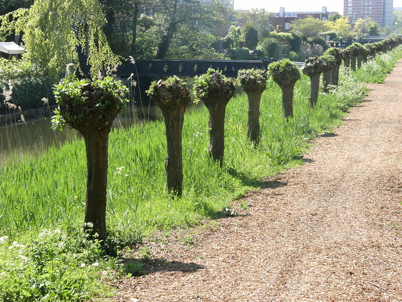 natural-tree-fence-garden