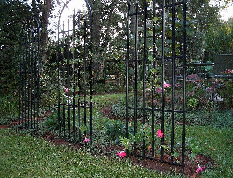 Flower_trellis- fence