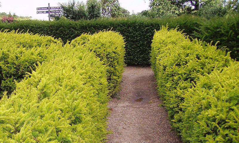 Garden-wall-dividers